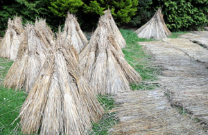 Thatching materials at Furzey Gardens