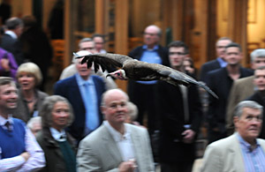 Vulture flying display