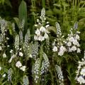 Hardy's Cottage Garden Plants exhibit