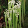 Hampshire Carnivorous Plants exhibit