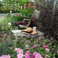 Hardy's Cottage Garden Plants