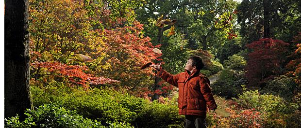 Autumn Colour at Exbury