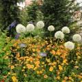 Hardy's Cottage Garden Plants
