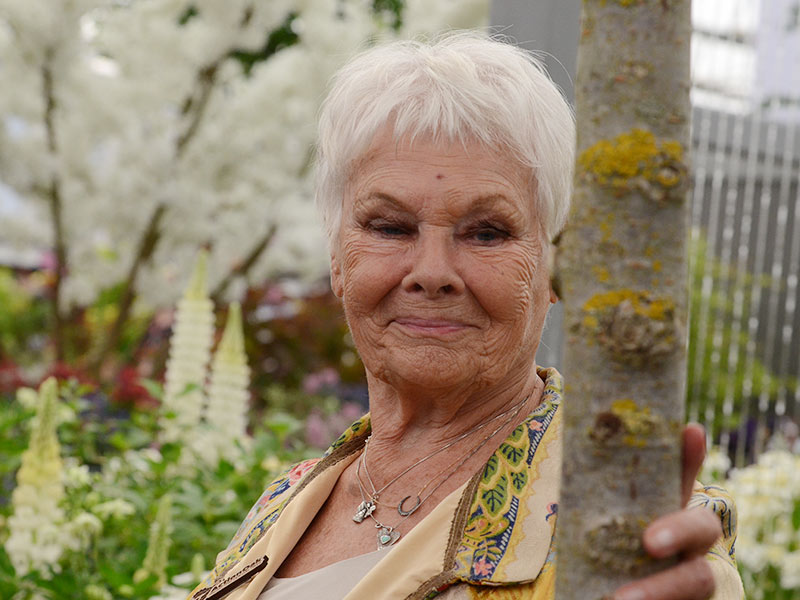 Judi Dench with Ulmus 'New Horizon'